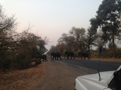 Well it just wouldn't be right if I didn't get to see a herd of elephants crossing the road
